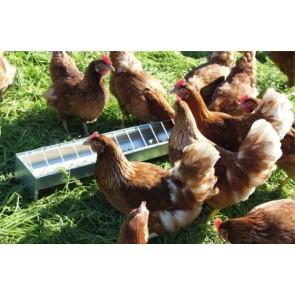 Mangeoire poules 10x75cm galvanisée